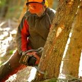 Waldarbeit mit Bauer Heinrich
